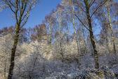 śnieg pokryte lasem — Zdjęcie stockowe