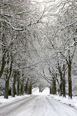 Snowcovered Road and trees — Stock Photo