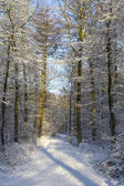 Footpath in snowy forest — Stock Photo