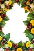 цветочная рамка, изолированные на белом фоне — Стоковое фото
