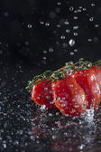Toatoes in Water — Stock Photo