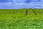 Meadow and tracks — Foto Stock