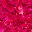 Stock Photo: Background from petals