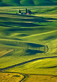 Endless wheat fields at Palouse region, Washington — Stock Photo