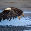 Stock Photo: AmericBald Eagle at Alaska
