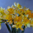 Stock Photo: Bouquet of daffodils