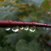 Macro photography of rain drops on branch — Stock Photo