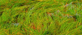 Green grass in detail — Stock Photo