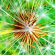 Dandelion flower detail — Stock Photo