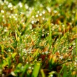 Detail photography of rain drops on lawn — Stock Photo
