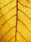 Macro photography of autumn leaf — Stock Photo