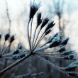 Detail photography of frozen flower — Stock Photo