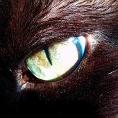 Feline eye close up — Stock Photo