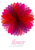 Pink transparent flower — Stock Vector