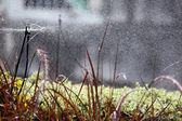Sprinkler, die blumen gießen. — Stockfoto
