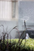 Sprinkler Spins watering the flowers. — Stock Photo