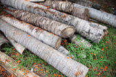 Coconut Timber stack together. — Stock Photo