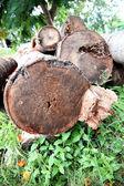 Přední část kokosového dřeva. — Stock fotografie