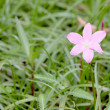 Stock Photo: Pink flower in the garden.