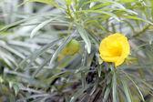 Closeup Yellow flowers in the garden. — Stock Photo