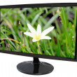 LED computer screen and white flower Picture. — Stock Photo #30494497