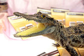 Model little crocodile. — 图库照片