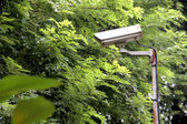 CCTV security camera in the park. — Stock Photo