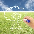 Stock Photo: Hand is drawing tree on grass and blue sky.