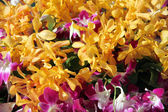 Focus yellow orchid. — Stock Photo