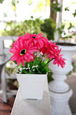 Pink flowers in white potted. — Стоковое фото