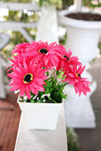 Pink flowers in white potted. — Stock Photo