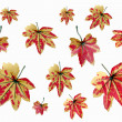 Stock Photo: Yellowish orange maple leaves.