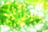 绿色散景背景. — 图库照片