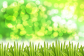 Green bokeh Background and Leaf on side. — Stock Photo