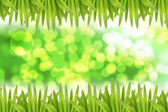 Green bokeh Background and Leaf on side. — Foto Stock