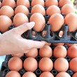 Hands are to lift input container egg. — Stock Photo #35788161