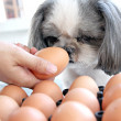 Stock Photo: Dog watching egg.
