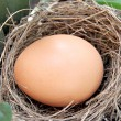 Stock Photo: Eggs in a nest.