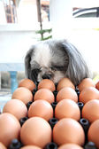 The Dog watching egg. — Stock Photo