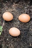 Three Eggs on ground. — Stock Photo