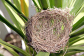 Nests on the leaf. — Stock Photo