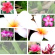 Tropical flower wide variety. — Stock Photo