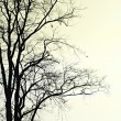 Silhouette of dead tree. — Stock Photo
