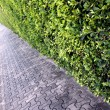 Stock Photo: Sidewalks in park.