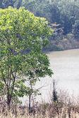 Alberi accanto a un lago in estate. — Foto Stock