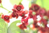 Red flower at garden. — Stock Photo