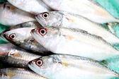 Fresh mackerel fish ingredient. — Stock Photo