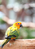 Parakeet or parrot on tree branch. — Stock Photo
