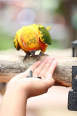 Parrot is eating foods. — Stock Photo