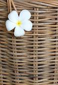 White plumeria stuck on wicker basket background. — Stock Photo